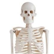 Skelet thumbnail