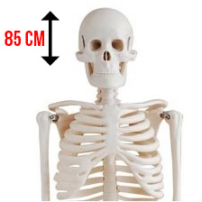 Skelet-thumbnail met afmeting
