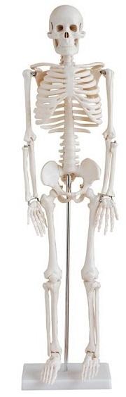 XC102-1 skelet