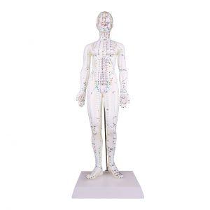 Accupunctuur model 48 cm Vrouw