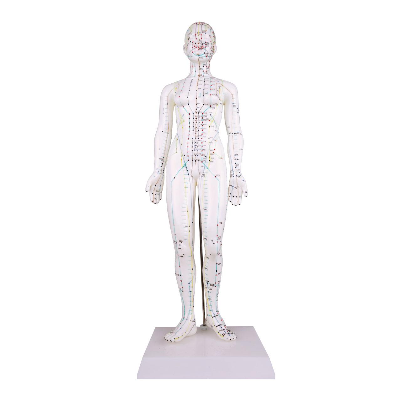 Afbeelding van Acupunctuur model 48cm (vrouwelijk)