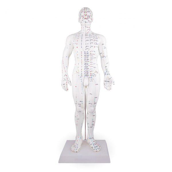 Accupunctuur model 50 cm Man