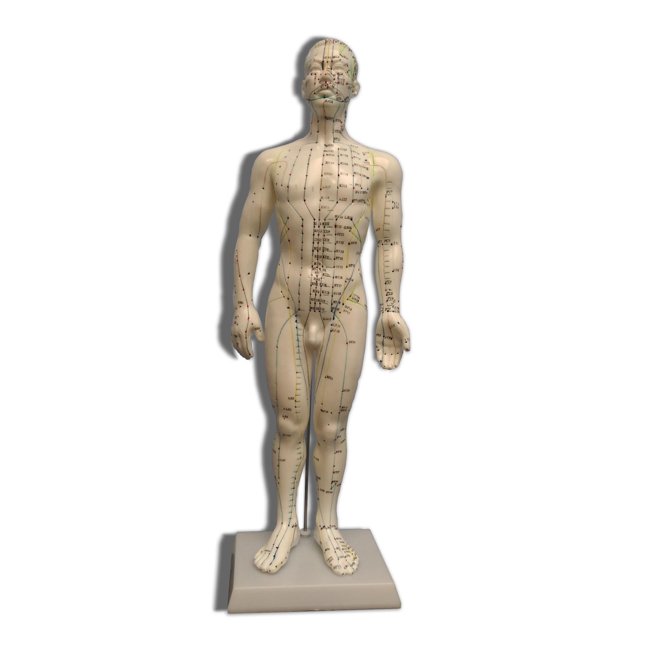 Afbeelding van Acupunctuur model 50cm (mannelijk)