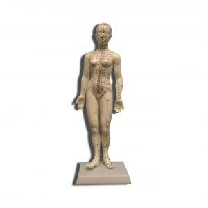 Acupunctuur model vrouwelijk