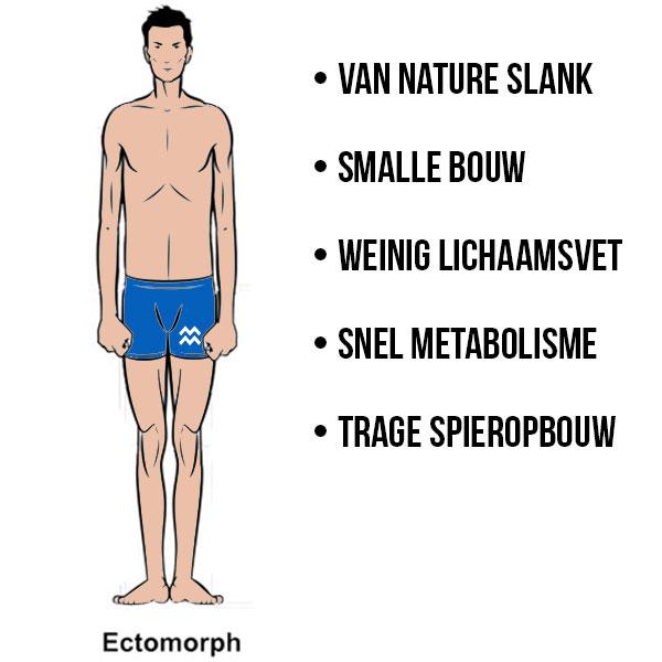 kenmerken ectomorf lichaamstype