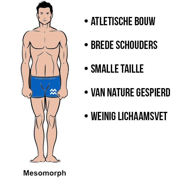 Kenmerken mesomorf lichaamstype